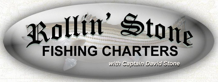 Rollin' Stone Fishing Charters with Captain David Stone, fishing out of Somers Cove Marina in Crisfield MD